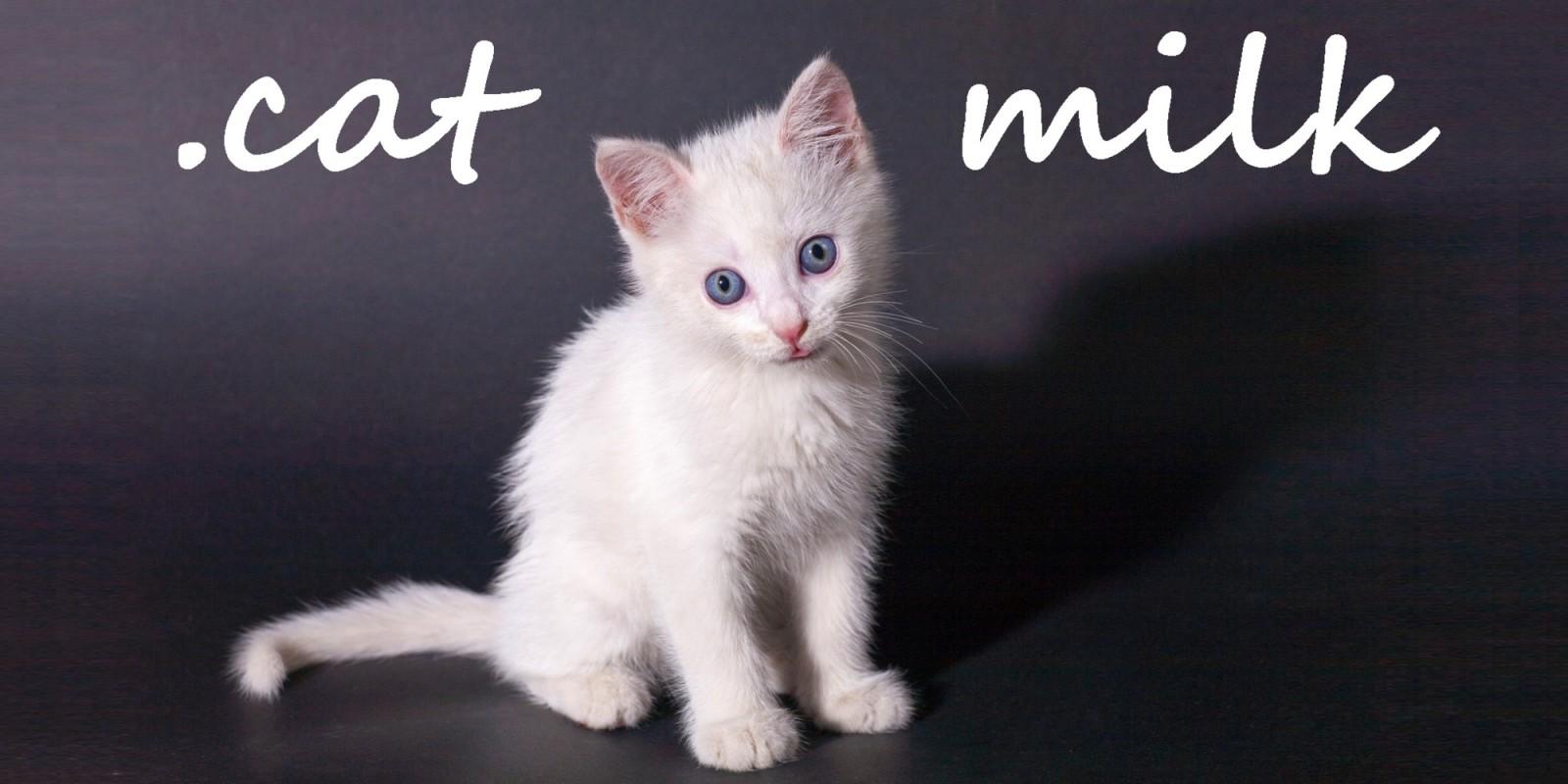 .cat Milk